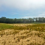 Exceptional 186 Acres in Southwest Michigan
