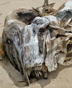 Unidentified Creature Found Lake Michigan South Haven St. Joseph