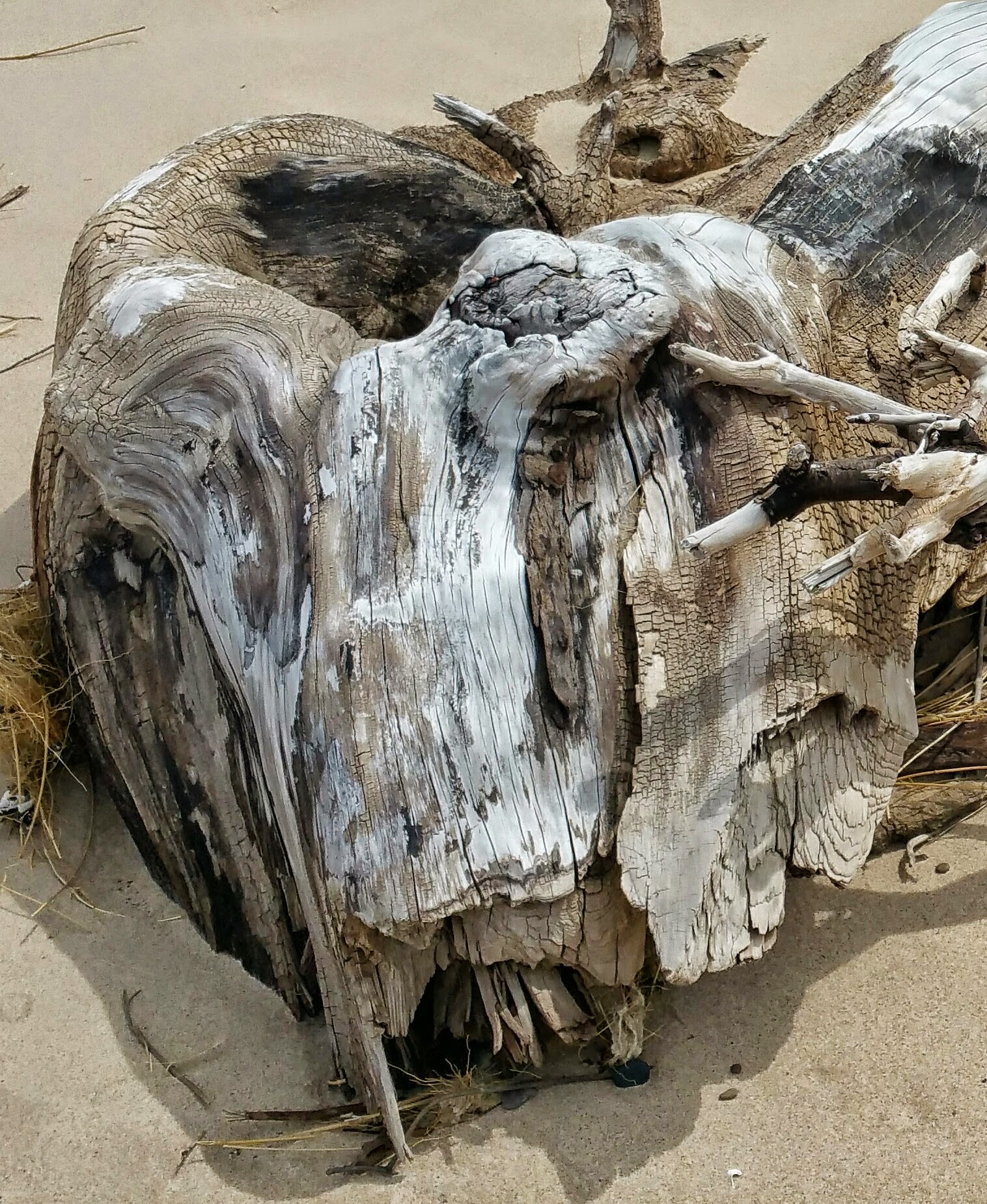 Unidentified Creature Found Along Lake Michigan
